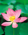 Used Lotus photo 16119