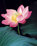 Used Lotus photo 16589