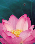 Used Lotus photo 16647