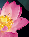 Used Lotus photo 16705