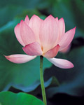 Used Lotus photo 16821