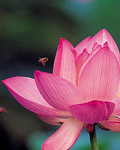 Used Lotus photo 16935