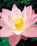 Used Lotus photo 17047