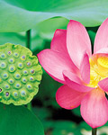 Used Lotus photo 17374