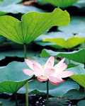 Used Lotus photo 17797