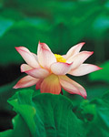 Used Lotus photo 17849
