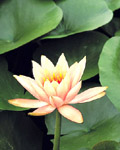 Used Lotus photo 18055
