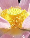 Used Lotus photo 18352
