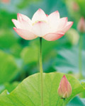 Used Lotus photo 20535