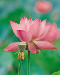 Used Lotus photo 20573