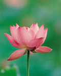 Used Lotus photo 20611