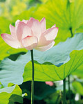 Used Lotus photo 20763