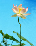 Used Lotus photo 4915