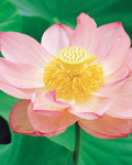Used Lotus photo 5058