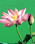 Used Lotus photo 6329