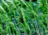 Green series of high-definition 13753