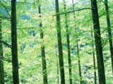 Forest trees 18402