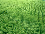 Green grass leaves 5059