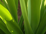 Green grass leaves 5628