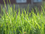 Green grass leaves 8016