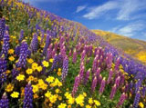 Webshots Wallpapers Flower 10589