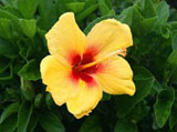Webshots Wallpapers Flower papers 1463