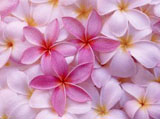Webshots Wallpapers Flower papers 245
