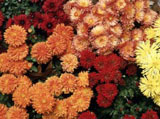 Webshots Wallpapers Flower papers 2478