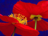 Webshots Wallpapers Flower papers 2806