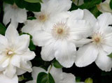 Webshots Wallpapers Flower papers 3289