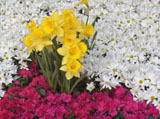 Webshots Wallpapers Flower papers 3447