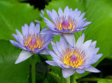Webshots Wallpapers Flower papers 3597