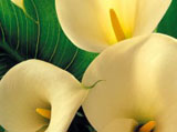 Webshots Wallpapers Flower papers 3745