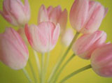 Webshots Wallpapers Flower papers 4041