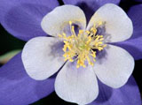Webshots Wallpapers Flower papers 4334