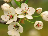 Webshots Wallpapers Flower papers 4481