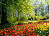 Webshots Wallpapers Flower papers 6331