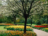 Webshots Wallpapers Flower papers 6458