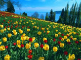 Webshots Wallpapers Flower 8017