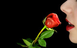 High-resolution photo roses 25019