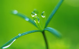 Sprouts leaves 12134
