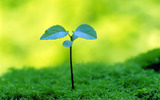 Sprouts leaves 2649