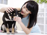 Beauty and the pets 20381
