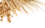 HD wheat crop material 9474
