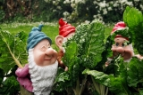 Dwarfs in the garden 32425