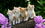 kittens with nature 32475