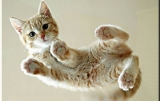 Kittens are flying 32482