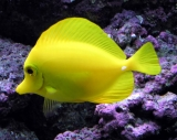 Tropical Fish 33726