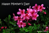 Happy Mother's Day  Cards 36458