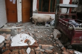 Over 150 Dead, Thousands Injured as Strong Earthquake Hits Sichuan Province 36566
